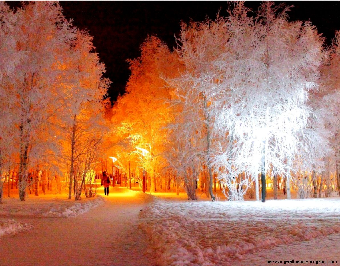 Nature winter snow trees night lights wallpaper