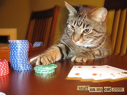 Cat Pictures Serious Playing Cards
