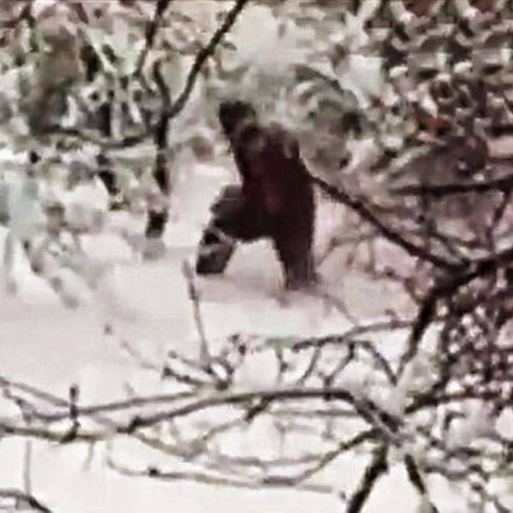 bigfoot caught in russia