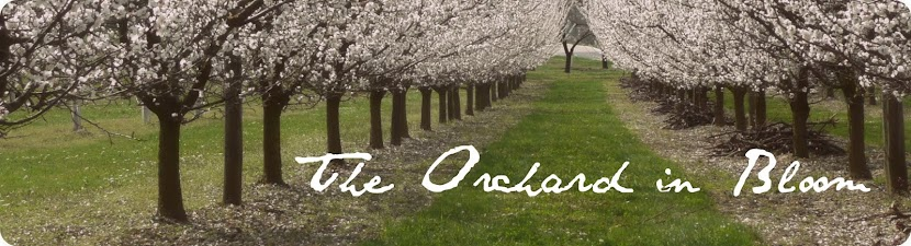 The Orchard in Bloom
