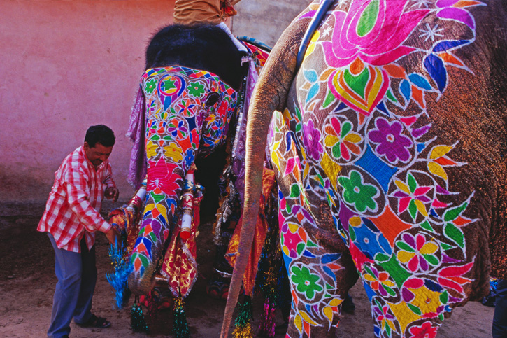 festival elephants, Indian festivals, painted animals, Kerala, Lonely Planet, Richard I'Anson