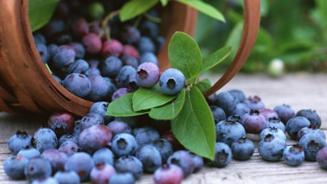 http://www.ramuanherbal.co.id/2015/06/buah-buahan-penurun-kolesterol-tinggi.html
