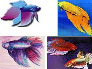 http://3.bp.blogspot.com/-zEwAQuoUQks/UI0CZ1l3vAI/AAAAAAAADbk/-0DEBHUPTYc/s320/fish.jpg