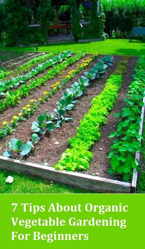 7 tips about organic vegetable gardening for beginners - Organic gardening practical tips ...