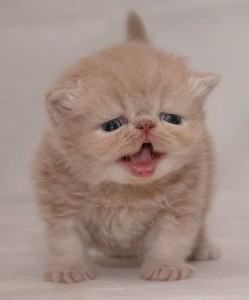 Merawat Anak Kucing Tanpa Induk