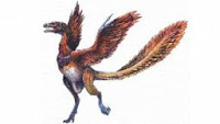 burung tertua di dunia