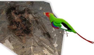 aves en el cretaceo Changchengornis