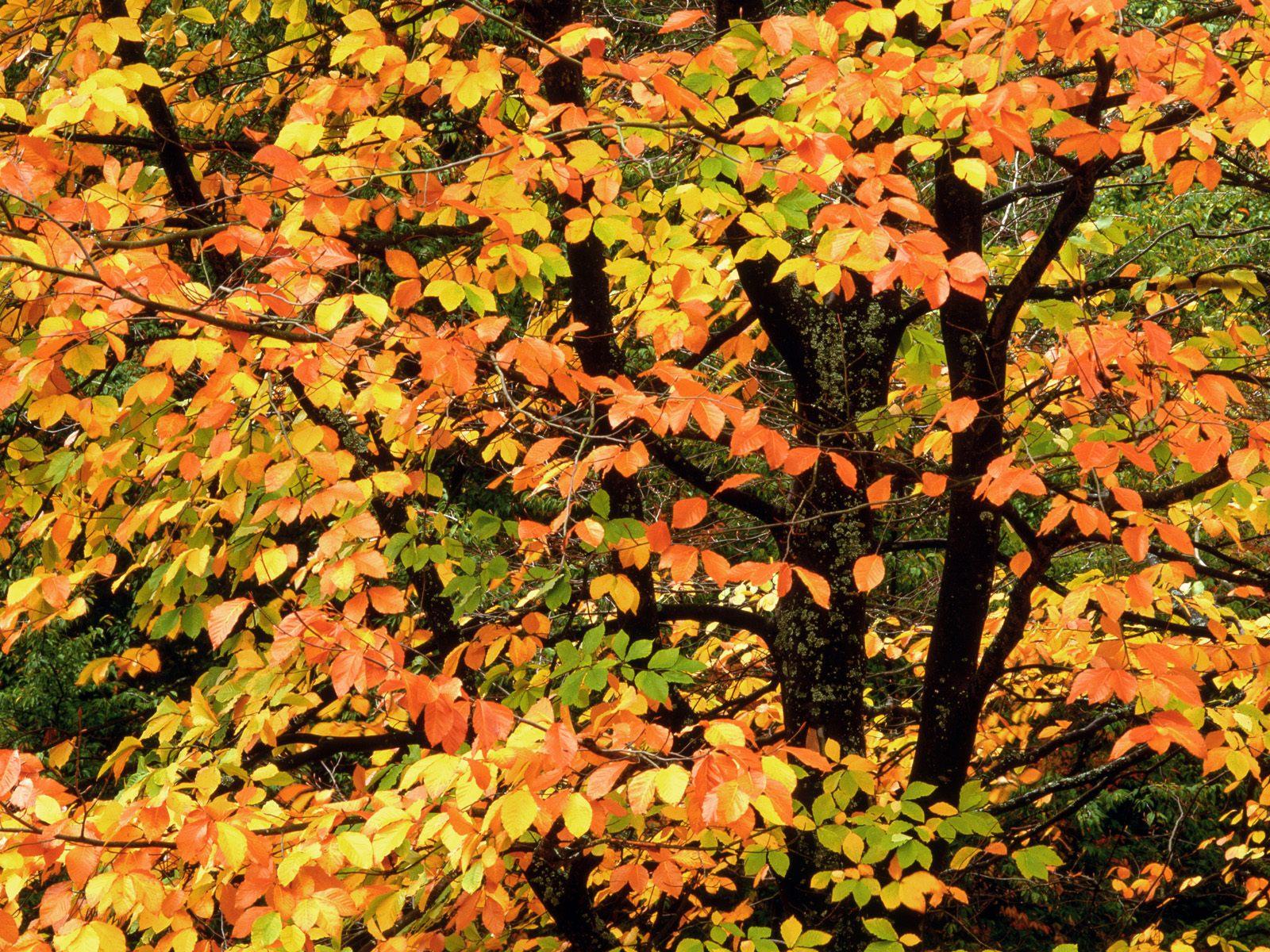 http://3.bp.blogspot.com/-zFpxTPzYiZI/UD_YcTAT0ZI/AAAAAAAAAFg/eFFYnTOF-E8/s1600/Nature+Landscapes+HD+Wallpapers+(4).jpg