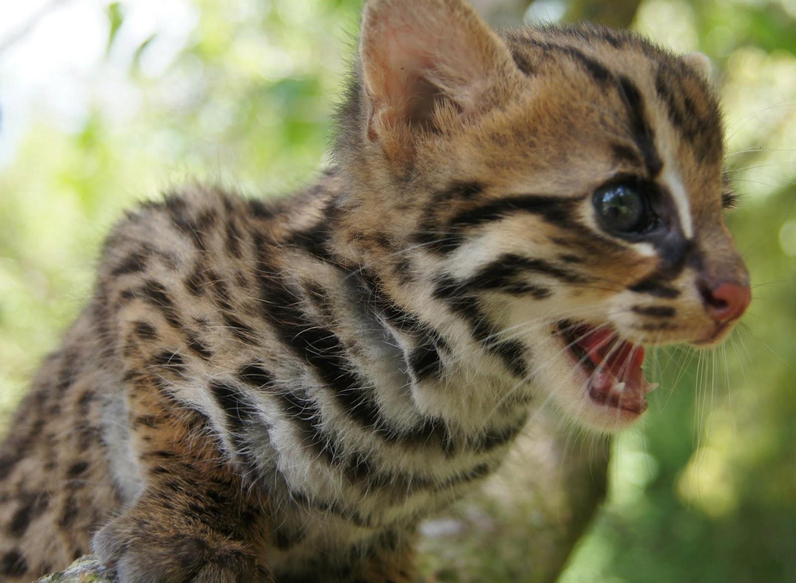 Laman Husna Anak Kucing Batu