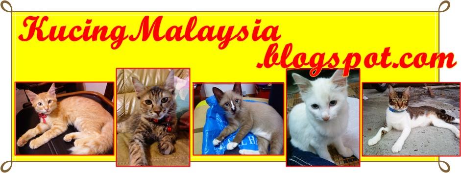 KucingMalaysia