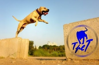 super dog Parkour, TRET anjing Parkour