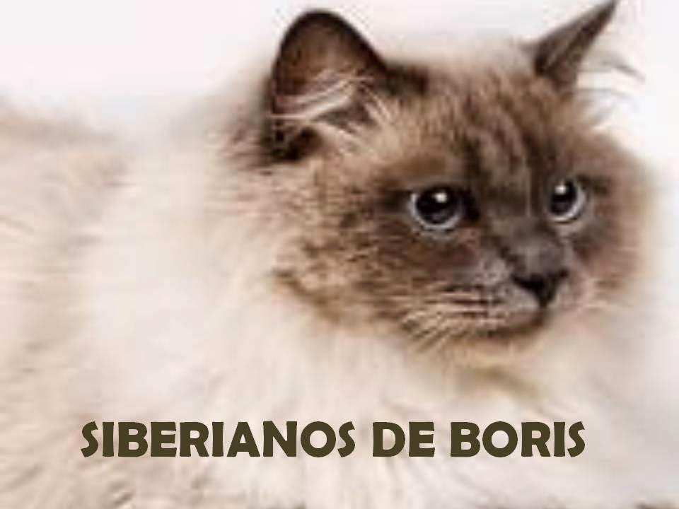 http://www.siberianosdeboris.com/Sitio_web/Inicio.html