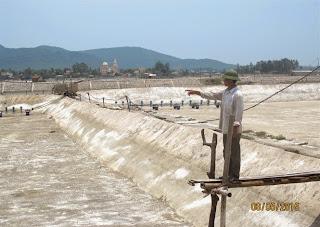 Tôm thẻ chết hàng loạt ở Nghệ An : Do môi trường hay con giống