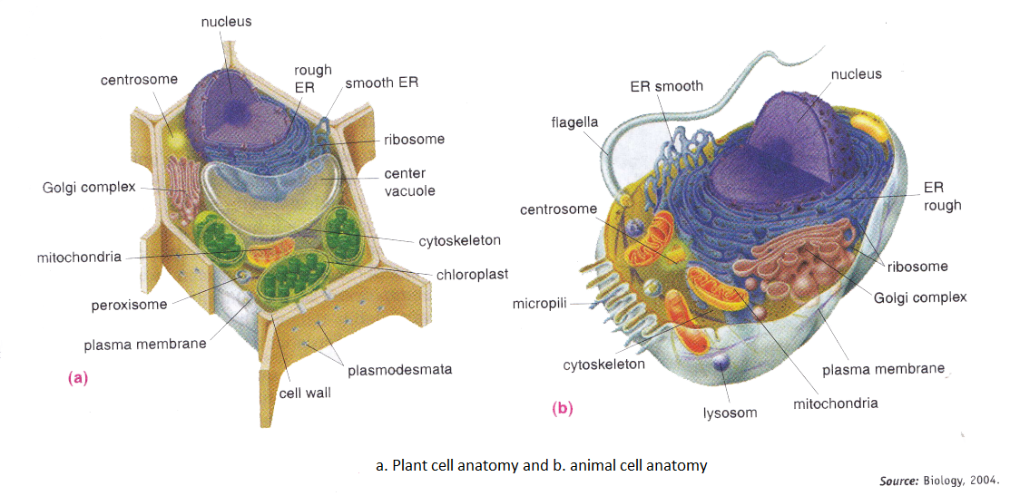 Plant cell anatomy functions
