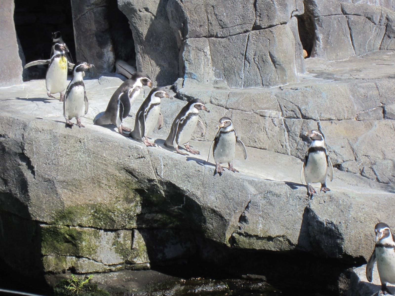 årskort til ålborg zoo massagepiger slagelse