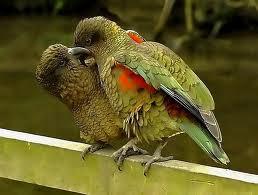SEDOT WC PORONG  SIDOARJO TLP 031-78273589 Gambar Burung