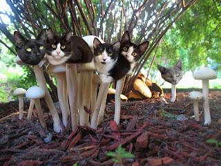 cat mushroom