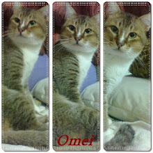 Budak Debab...Omei