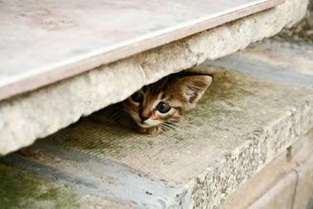 gambar kucing bersembunyi