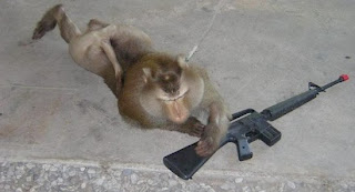 Funny Monkeys With Gun