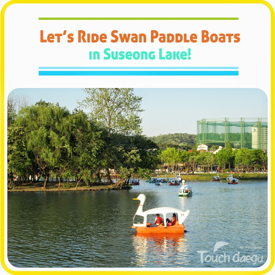 Let's ride swan paddle boats in Suseong Lake!