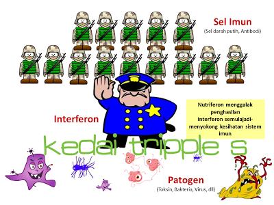 Interferon melindungi tubuh dari serangan virus dan patogen