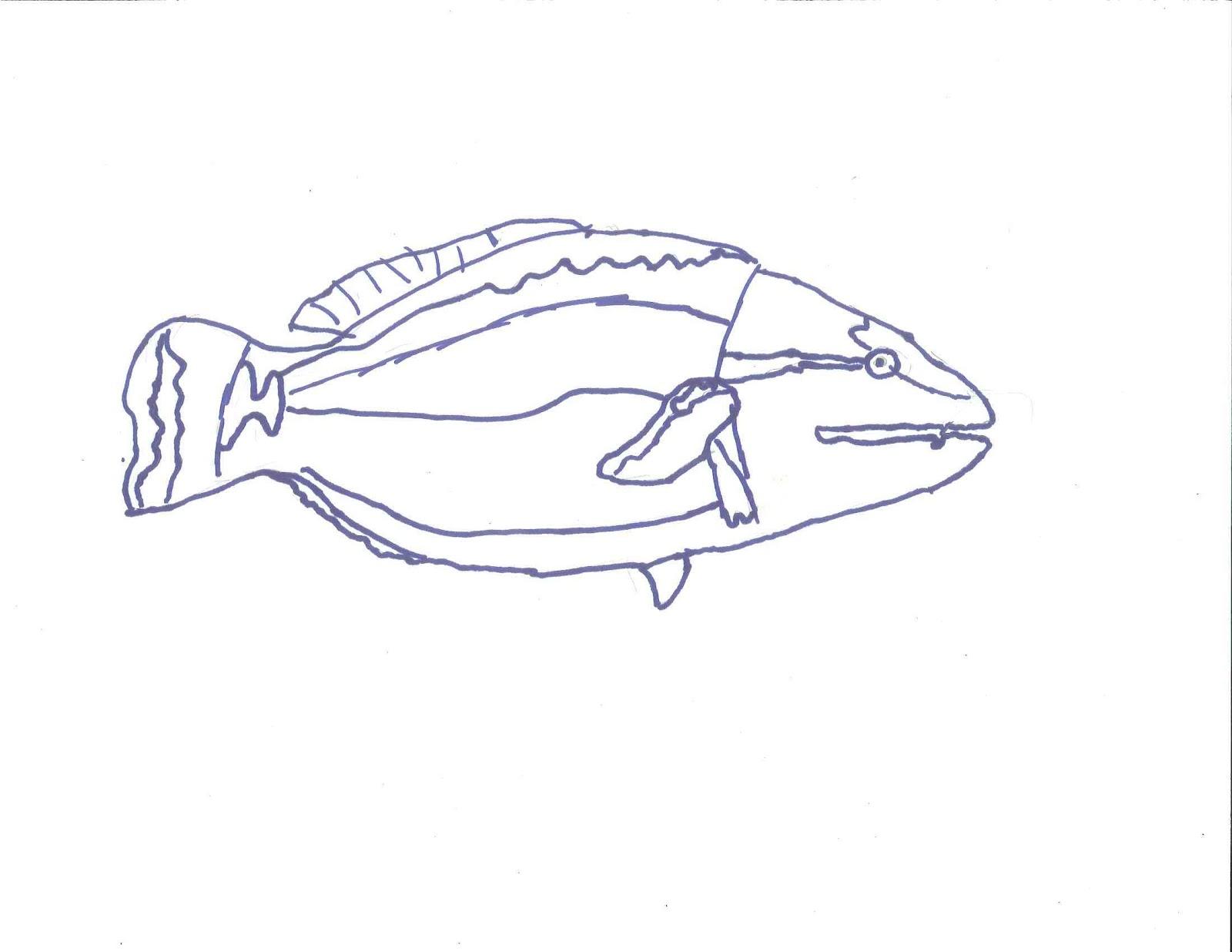 Line Art Fish : Fish line drawings th grade art