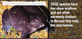 EDGE - Environmentally Distinct Globally Endangered