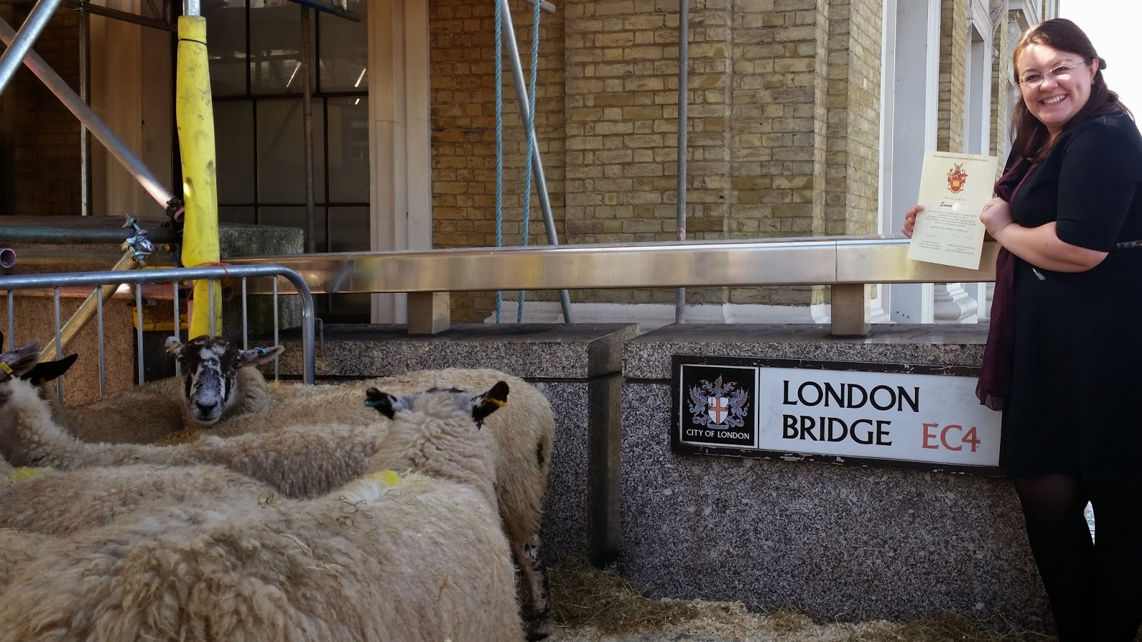 The day I drove Sheep across London Bridge - Adventures of a London Kiwi