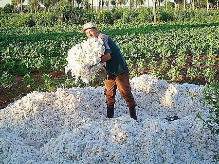 Que significa soñar con siembra de algodon