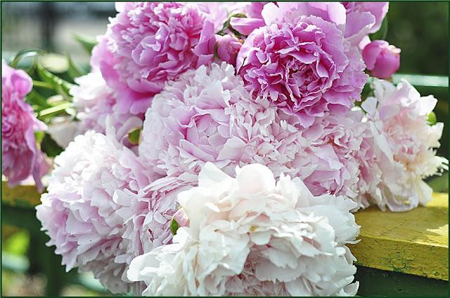 Пионы мои любимые цветы с детства при