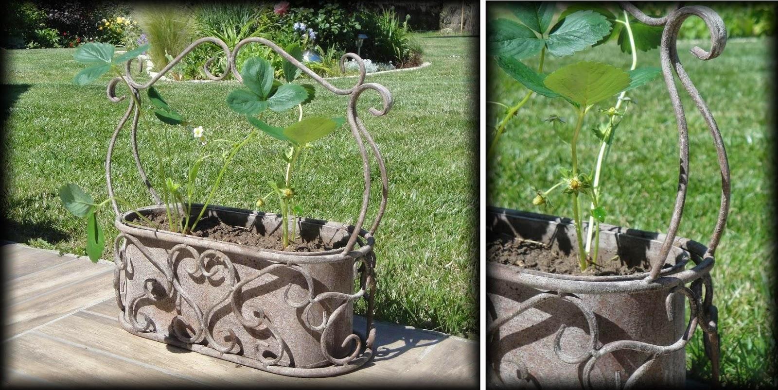 Cocoon garden j 39 ai test legens jardins d 39 hiver et - Jardins dhiver com ...