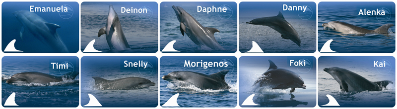 Surprise your loved ones with a beautiful and useful gift: adopt a dolphin from Slovenia and thus support dolphin research and conservation in the North ...