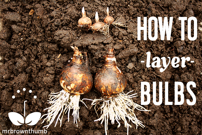How to layer garden bulbs