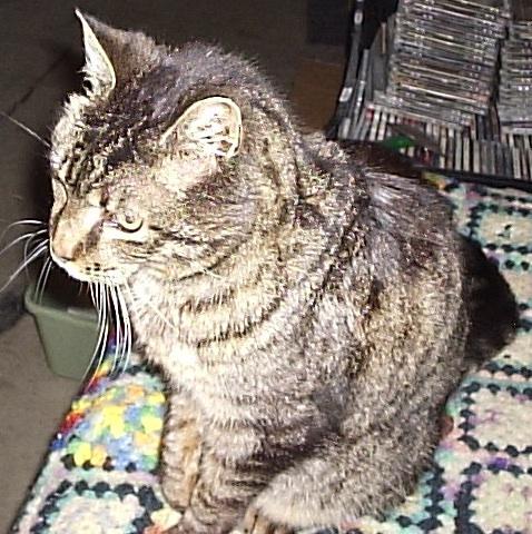 cat face pattern quilt