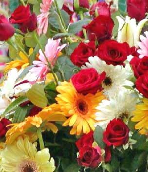fotos de flores - rosas y flores