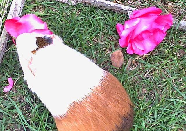 Homenaje a Lulú, comiendo Rosas, que tanto le gustaban