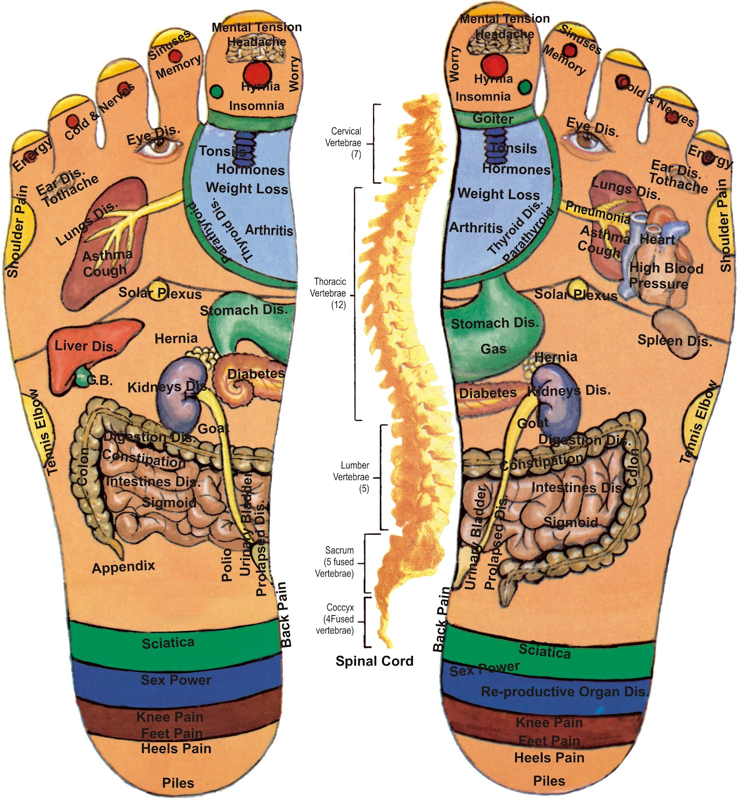 Acupressure Points Chart Hands acupressure (reflexology) charts ...