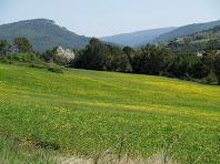 Camps de les Vinyes a Sant Pere de Valldeneu