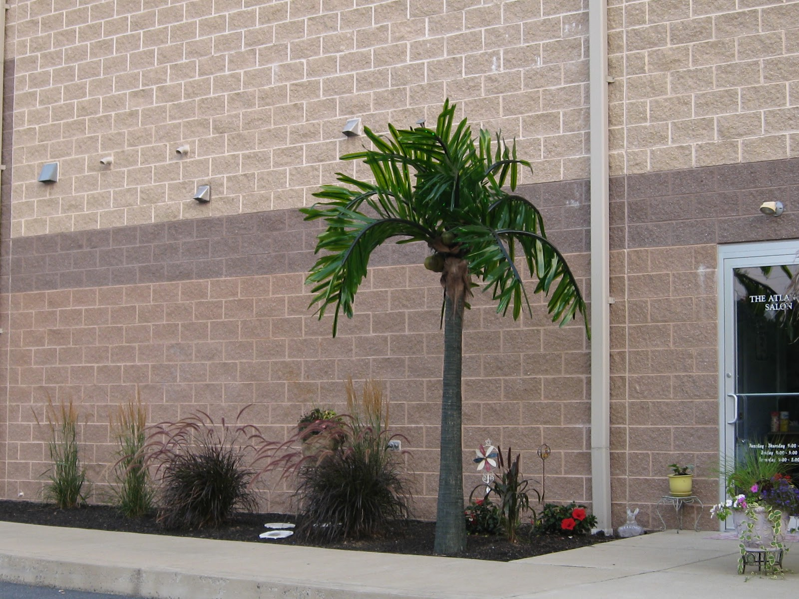 Led lighted palm tree the most realistic for Abaca salon harrisburg pa