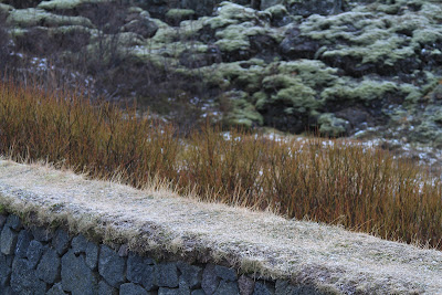 Layers in Þingvellir (Thingvellir Park): sod on a wall, Tea-Leaved Willow (Salix pylicifolia) in orange browns, and Woolly Fringe Moss in the background.