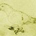 Oceanic eclectus parrot