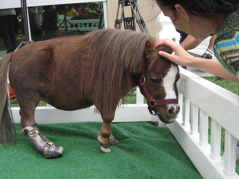 The Biggest Spider In The WorldSmallest Horse In The World 2014