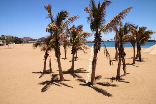 gruppo di palme sulla spiaggia
