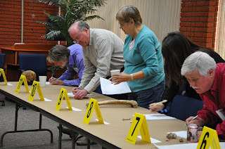 Participants test their knowledge of animal and human bones.