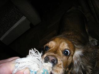 εκπαίδευση σκύλων με παιχνίδια - τράβα 4