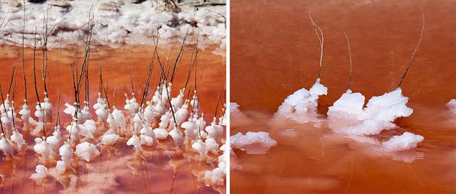 بحيرة في كامارغ في فرانسا تتحول إلى اللون الأحمر pinksaltlake03.jpg