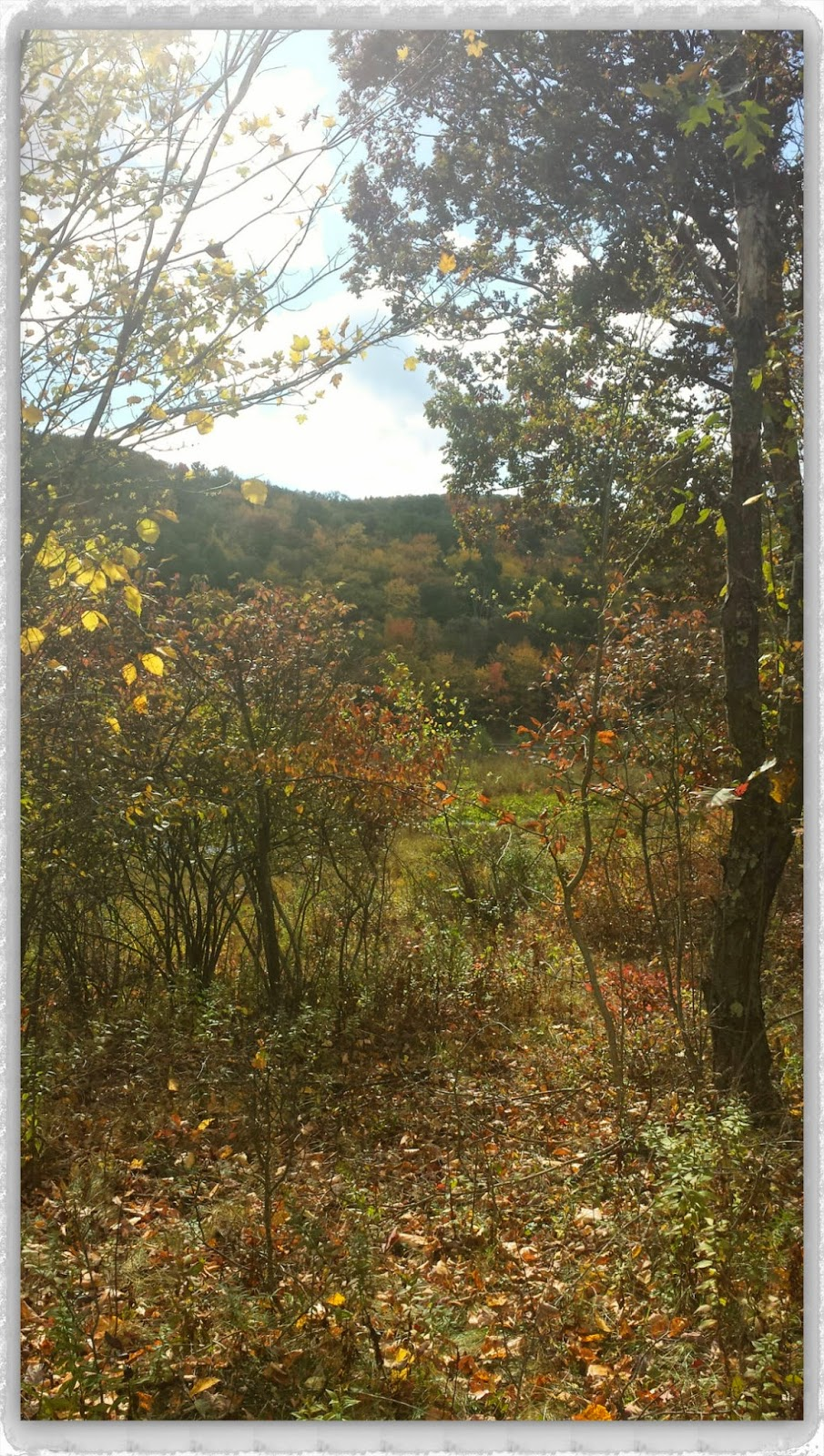 An Autumn Walk At One Of My Favorite Places --How Did I Get Here? My Amazing Genealogy Journey --Binghamton University Nature Preserve