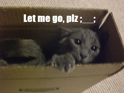 """Let me go, plz ;__;"" - Charlie is sprawled diagonally in a box that stands upright, with its opening at the top. He clutches the edges, trying to pull himself out. For the record, he got himself in there. © Laura Sheana Taylor, 2012."