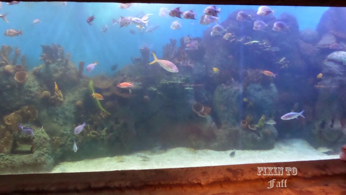 Cameron Park Zoo Marine Aquarium